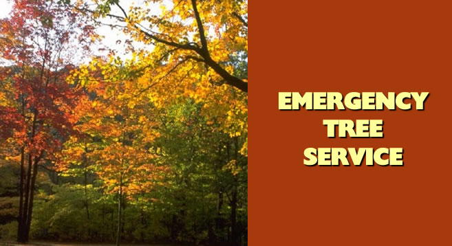 Knoxville, TN - Tree Service - Emergency Tree Service